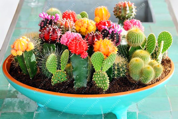 100 pcs mix cactus seeds t Rare succulents plant for home garden decoration