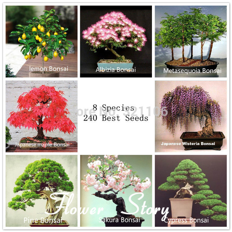 Bonsai Package 8 Packs Bonsai Tree Seeds Pine Maple Bonsai Seeds DIY Home Garden Combined Green Plants