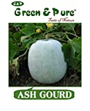 Green & Pure - High Yield Organic Vegetable Seeds - Ash Gourd (Pack of 1) for Kitchen / Terrace / Home Garden
