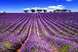 Herbal Plants For Growing - Lavender Seeds Home Depot Kitchen Garden Pack by Creative Farmer