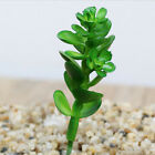 Simulation Mini Plastic Miniature Succulents Plants Garden Home Office Decor Hot