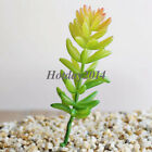 Simulation Mini Plastic Miniature Succulents Plants Garden Home Office Decor